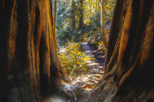 © Jul3s83 | Dreamstime.com - Muir Woods In Northern California Photo