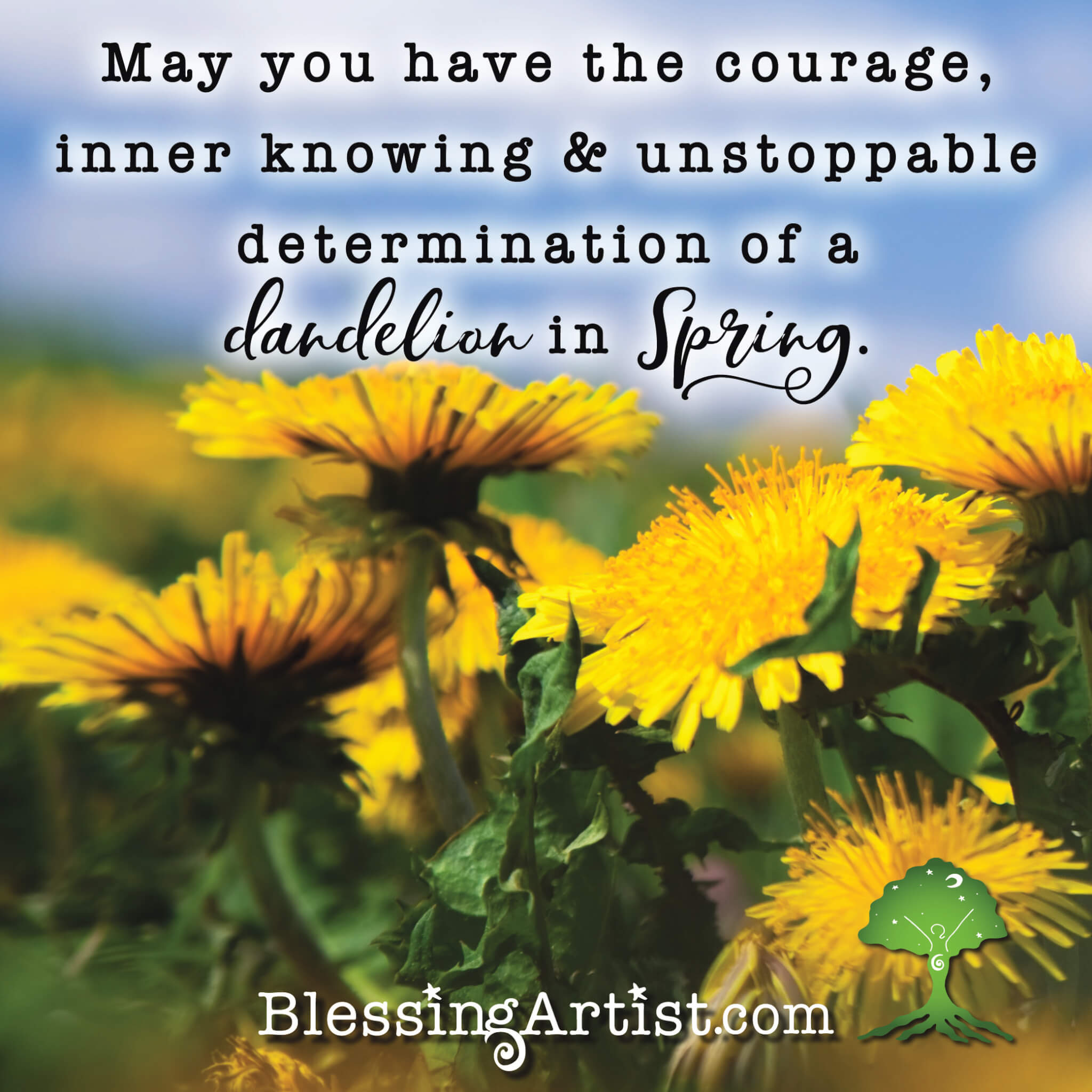image of dandelions with words: May you have the courage, inner knowing & unstoppable determination of a dandelion in spring